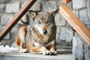 Un fine settimana… da lupi