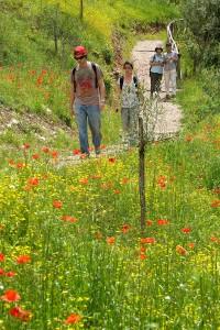 Bosco di San Francesco, Assisi, Andrea Angelucci, 2013 © FAI - Fondo Ambiente Italiano