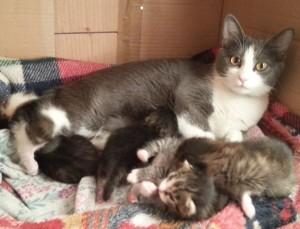 In punta di Coda – La sterilizzazione felina