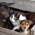 Diritti animali e diritti umani, quale cambiamento?