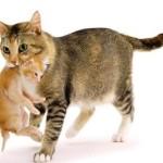 sterilizzazione-gatti