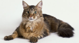 In Punta di Coda | L'anagrafe felina e i microchip