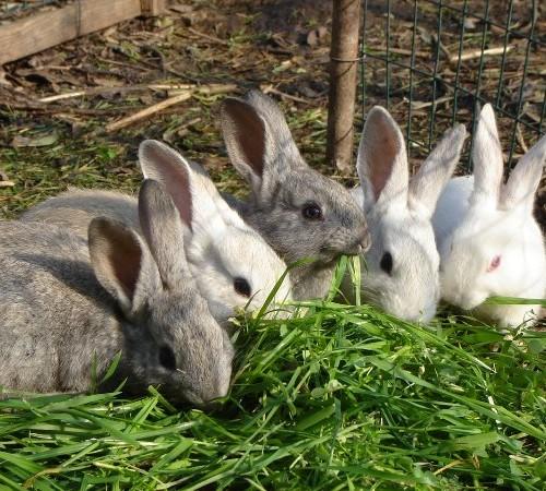 In Punta di Coda | Adottare un Coniglio