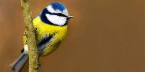 In Punta di Coda | Adottare un Uccello