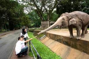 In Punta di Coda | Zoo, la loro sofferenza per il nostro divertimento