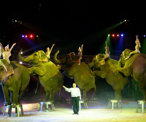 In Punta di Coda | Circo, la loro sofferenza per il nostro divertimento