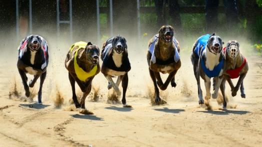 070716_grehound_racing