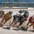 In Punta di Coda | Corse dei cani… la loro sofferenza per il nostro divertimento