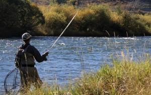 In Punta di Coda | Pesca sportiva, la loro sofferenza per il nostro divertimento
