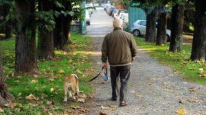 Cani e gatti, sempre più cittadini a quattro zampe