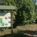 Miele urbano, business e monitoraggio ambientale