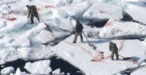 In Punta di Coda | La loro sofferenza per la nostra vanità – 1° parte