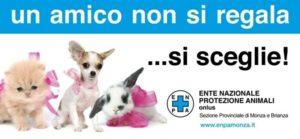 In Punta di Coda | Non comprare un cucciolo, adotta un cane in canile!