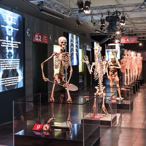 Human Bodies, il corpo umano a nudo