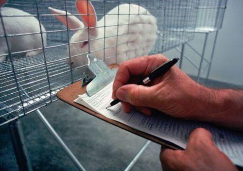 In punta di coda | La Vivisezione