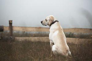 Salute dei cani in città, una giornata alle Vallere