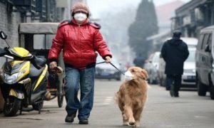 Gli animali domestici sentinelle dell'inquinamento