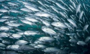 Inquinamento e Oceani da The Lancet