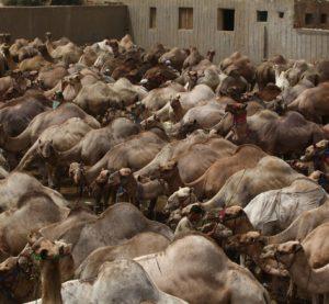 Prosegue la call Veterinaria sulle Zoonosi:  nuova definizione