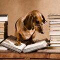 Vita da cani: loro diritti, nostri doveri