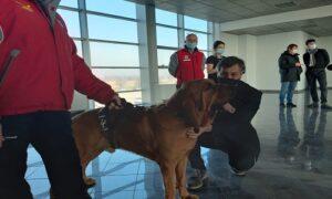 Cani anti-Covid, a Cuneo i test rapidi in aeroporto