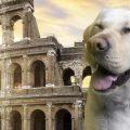 Indovina chi viene al museo? I musei per cani